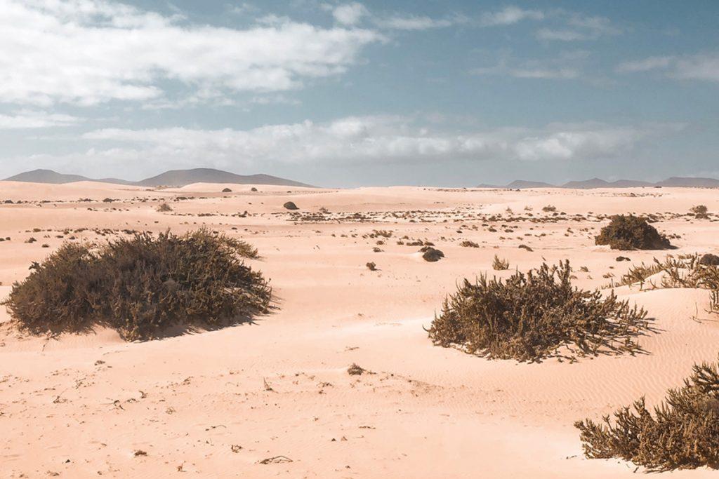 Dünen Fuerteventura