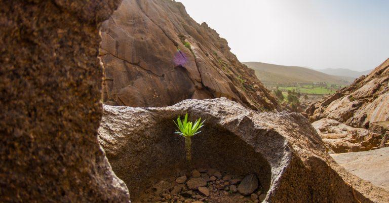 Pflanze im Felsen