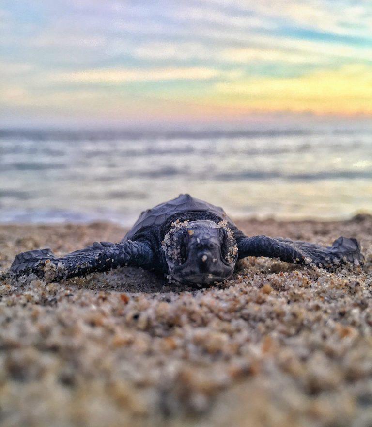kleine Schildkröte im Sand