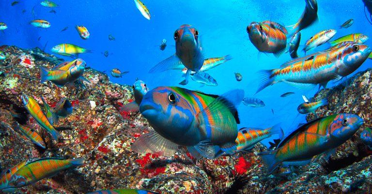 Unterwasserwelt Fische